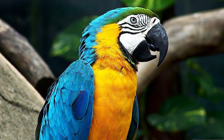 parrot-1218241_1920