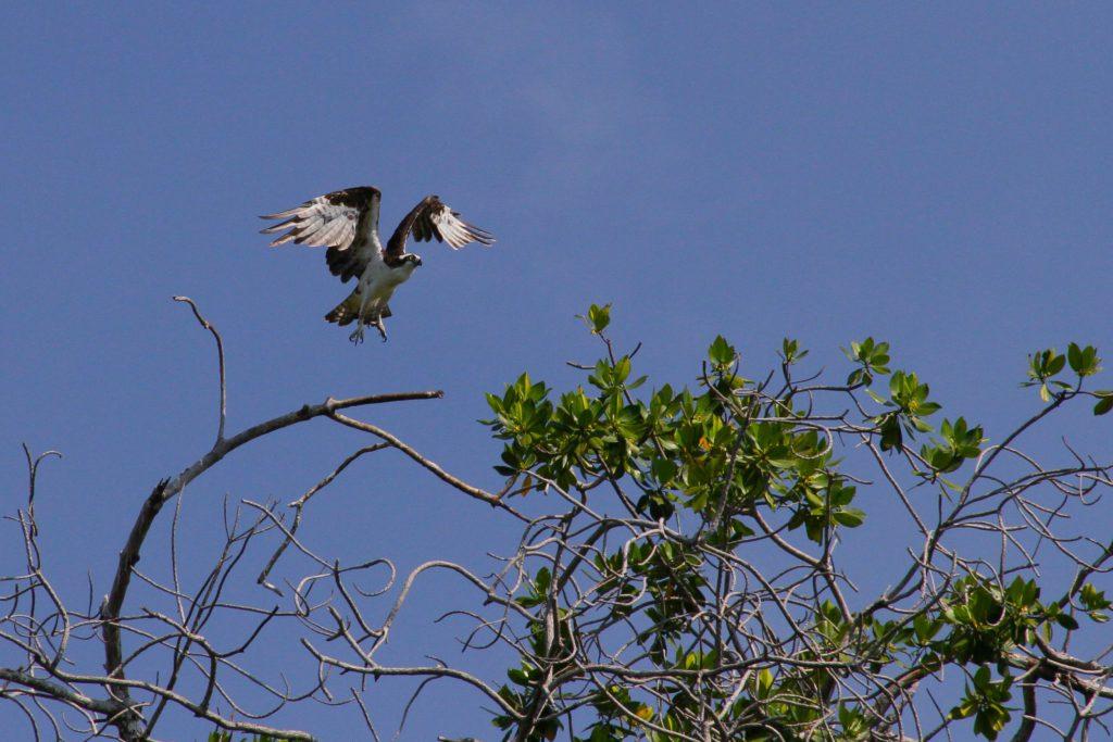 puerto-escondido-bird-watching-1