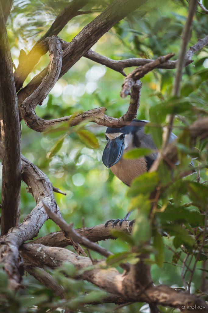 puerto-escondido-bird-watching-2