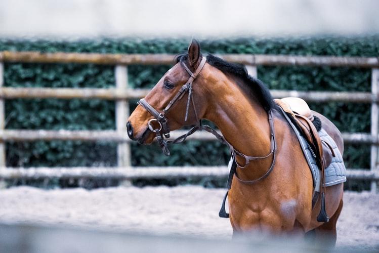 puerto-escondido-horseback-riding-2