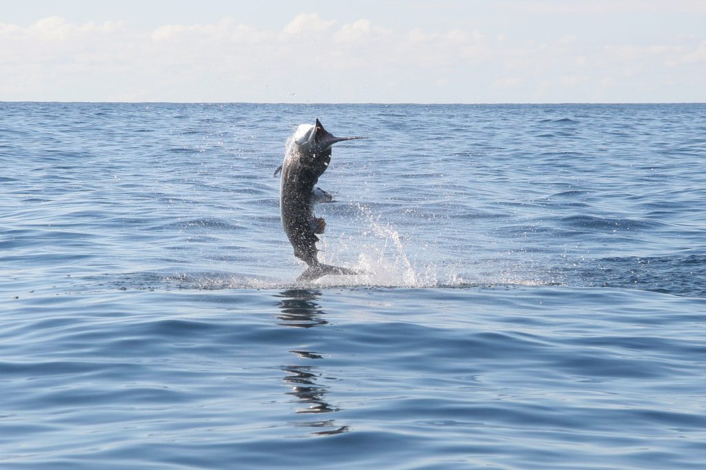 puerto-escondido-sport-fishing3