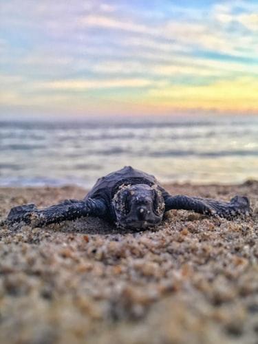 puerto-escondido-turtle-release-1