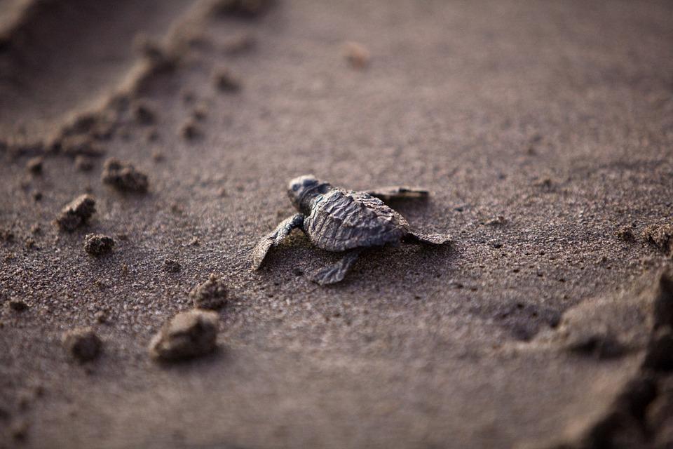 puerto-escondido-turtle-release-2