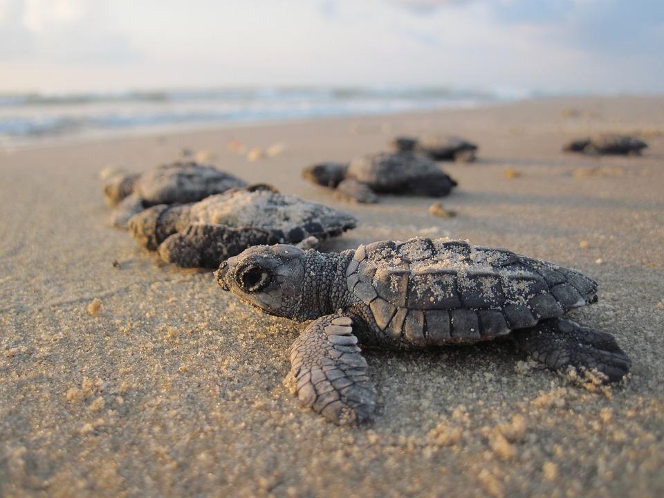 puerto-escondido-turtle-release-3