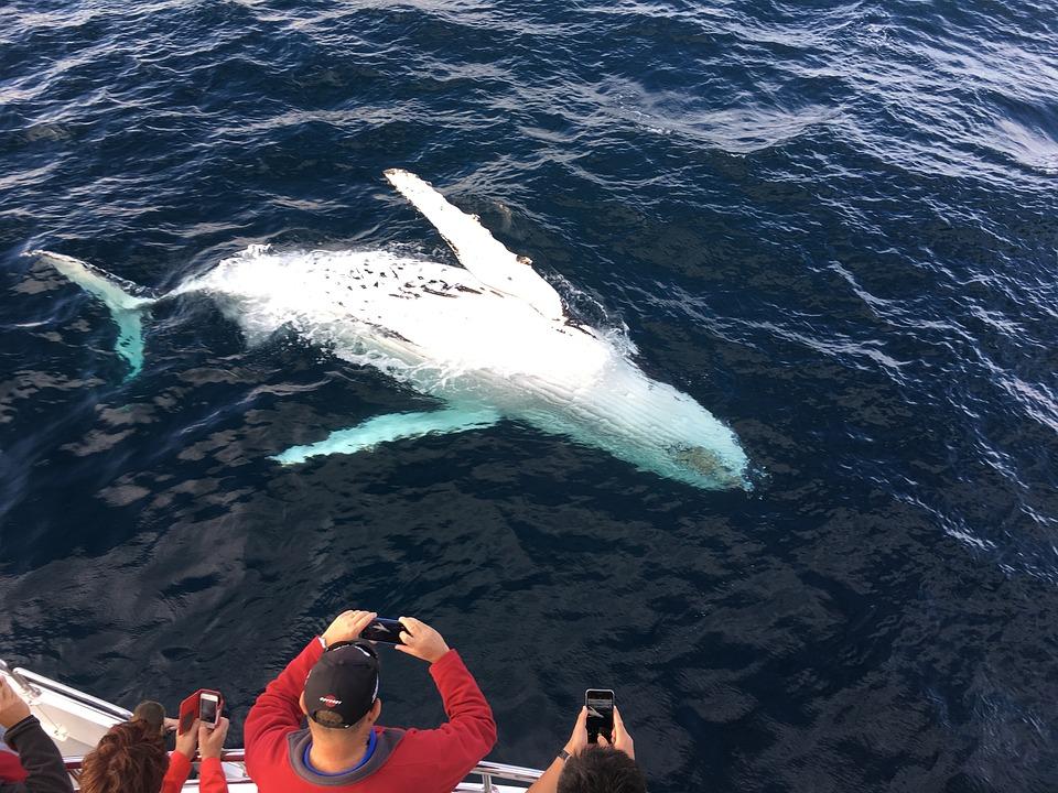 puerto-escondido-whale-watching1