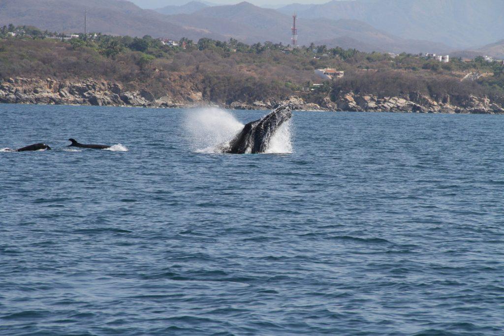 puerto-escondido-whale-watching2