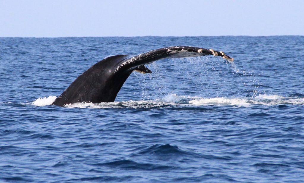 puerto-escondido-whale-watching4
