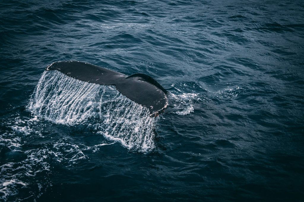 puerto-escondido-whale-watching5